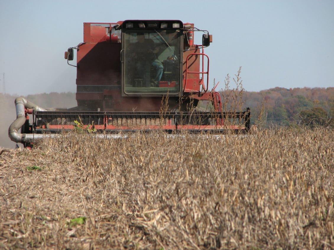 Mehedinți: Peste 10.000 de hectare de grâu au rămas necultivate