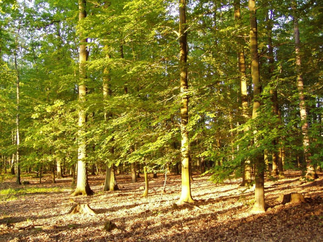 Lucia Varga: Rata tăierilor necontrolate de pădure este de două ori mai mare decât cea a regenerărilor şi plantărilor