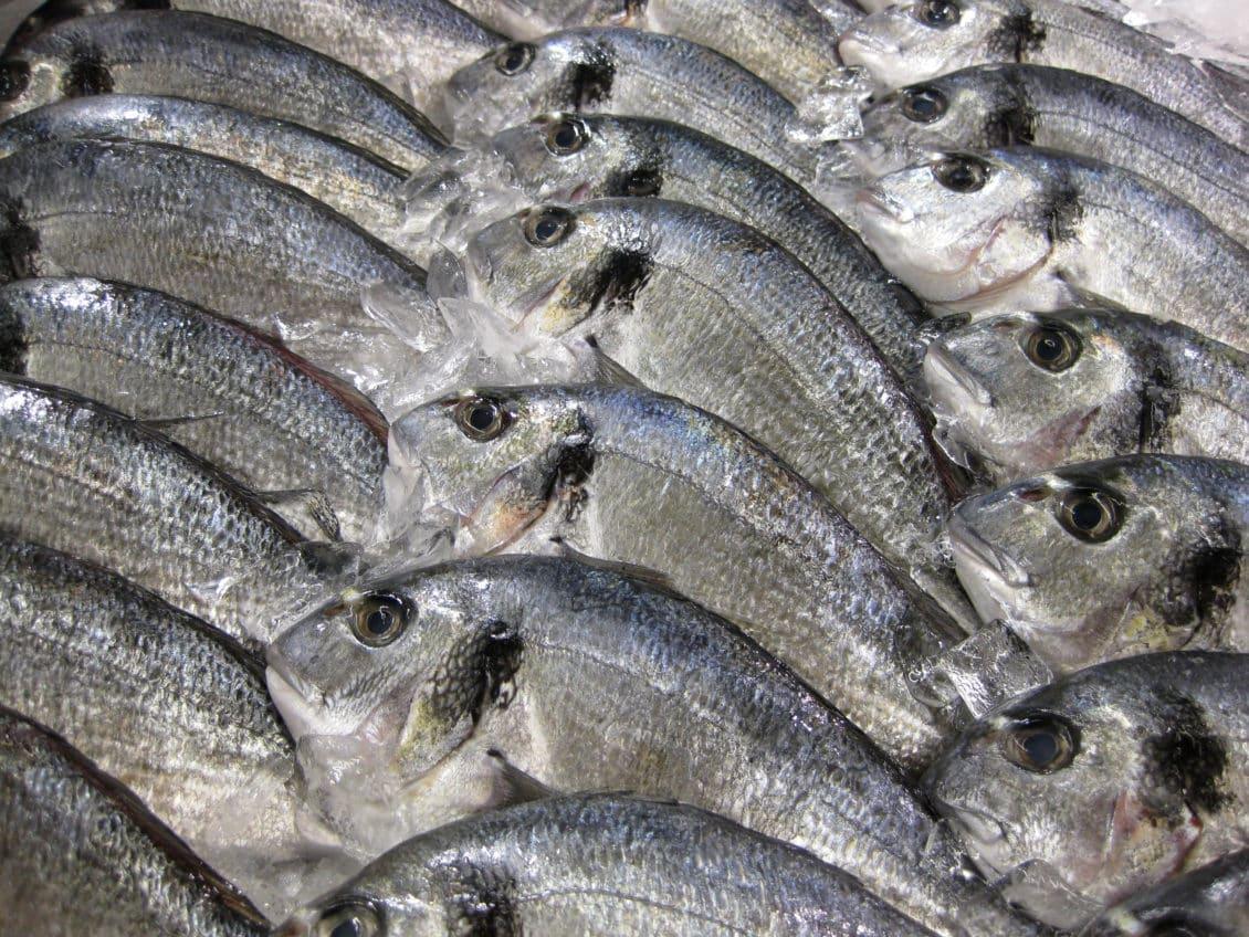 Tulcea: Nivelul ridicat al Dunării anunţă o resursă piscicolă bogată