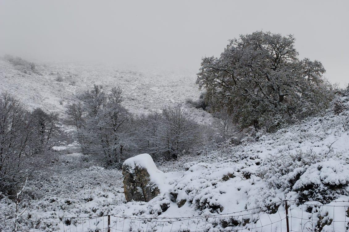 Prognoză ANM: Excedent de precipitații și un regim termic normal, în următoarele trei luni
