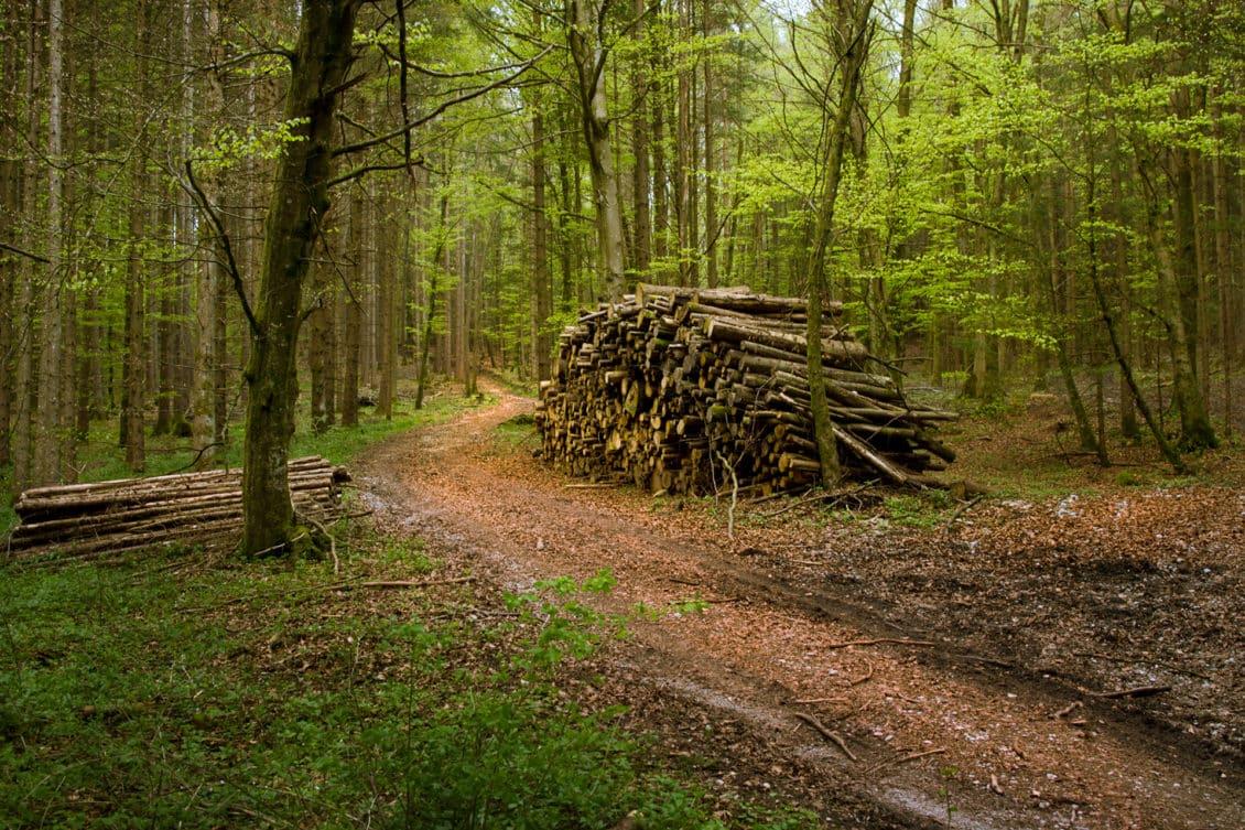 Romsilva a recuperat în instanță aproape 10.000 de hectare de pădure; alte 400.000 hectare sunt pe rol în diverse stadii