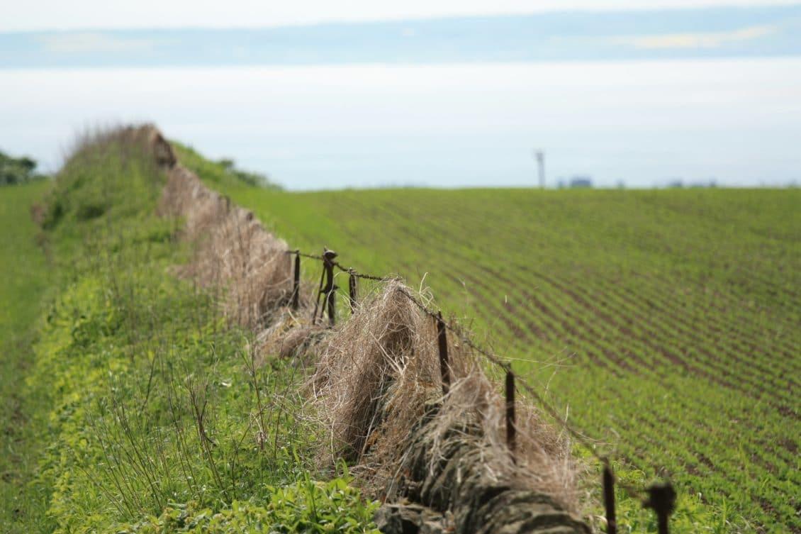 Ghețea (CEC Bank): Anul trecut a fost un interes ridicat pentru cumpărarea de terenuri agricole