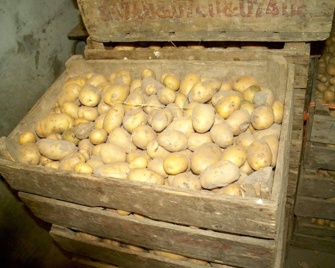 Suceava: Agricultorii nu-şi pot vinde cartofii nici cu 30 de bani/kg. Preţul cartofului, de patru ori mai mic decât anul trecut