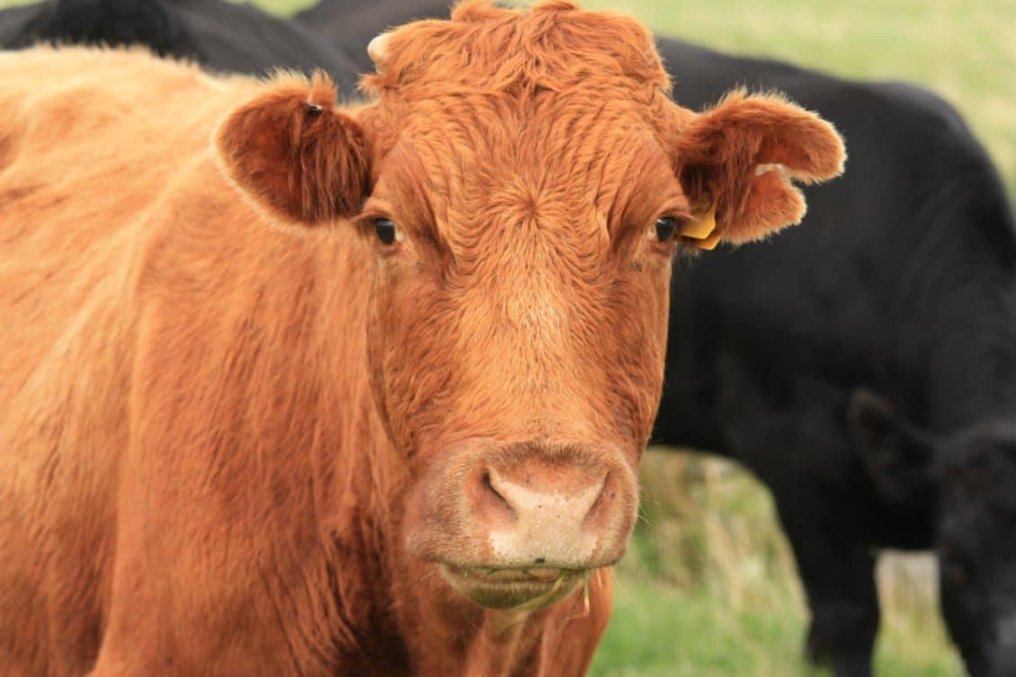 AGROSTAR: Dispariția cotei de lapte va fi un dezastru pentru micii producători din România