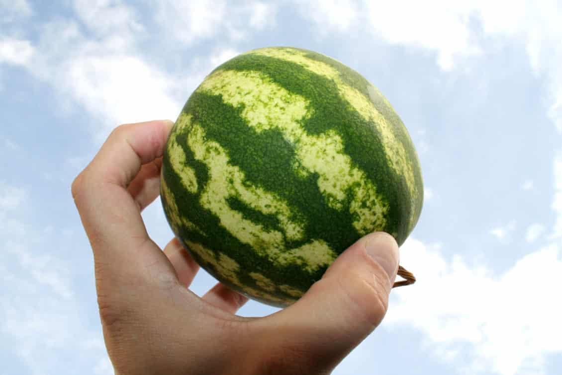 """Dolj: Brandul """"pepenele de Dăbuleni"""" este falsificat cu produse din import"""