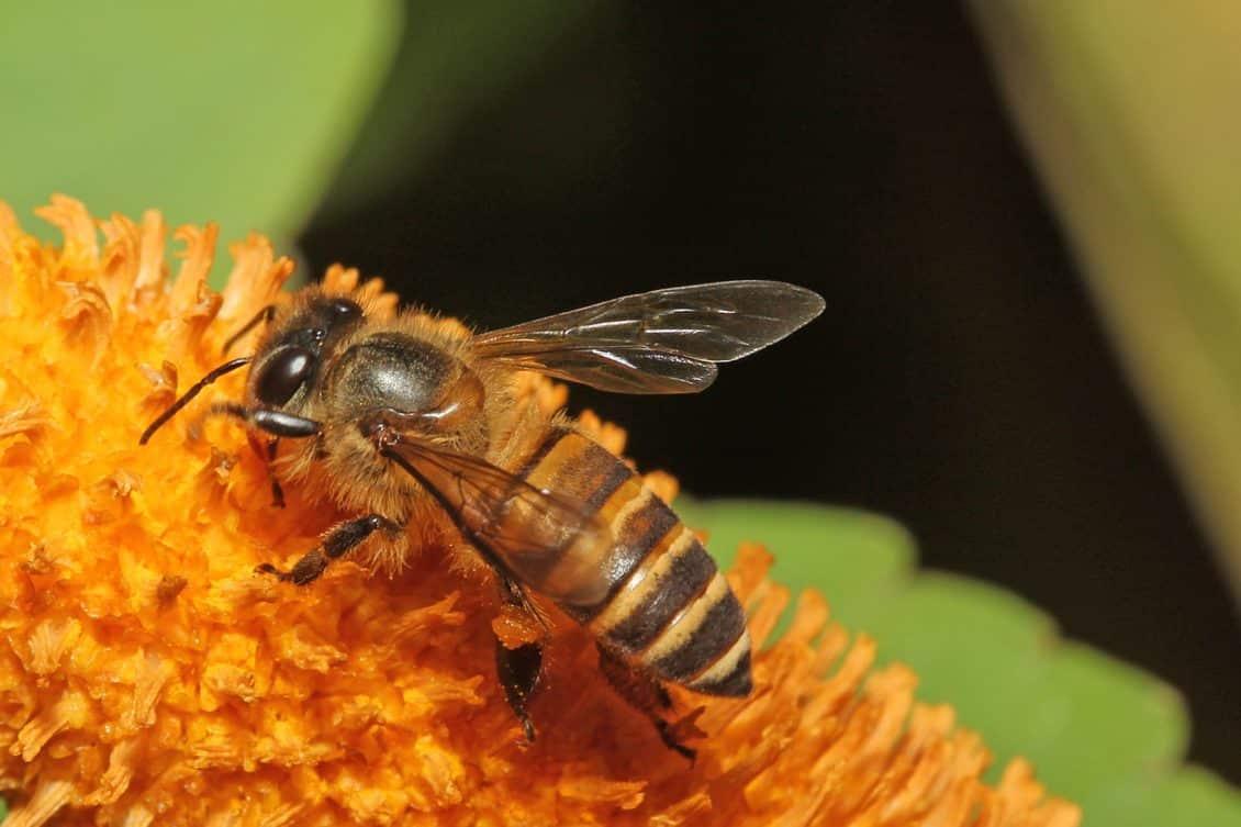 Aproape 30 milioane de lei vor fi acordați prin PNA ca sprijin pentru apicultori