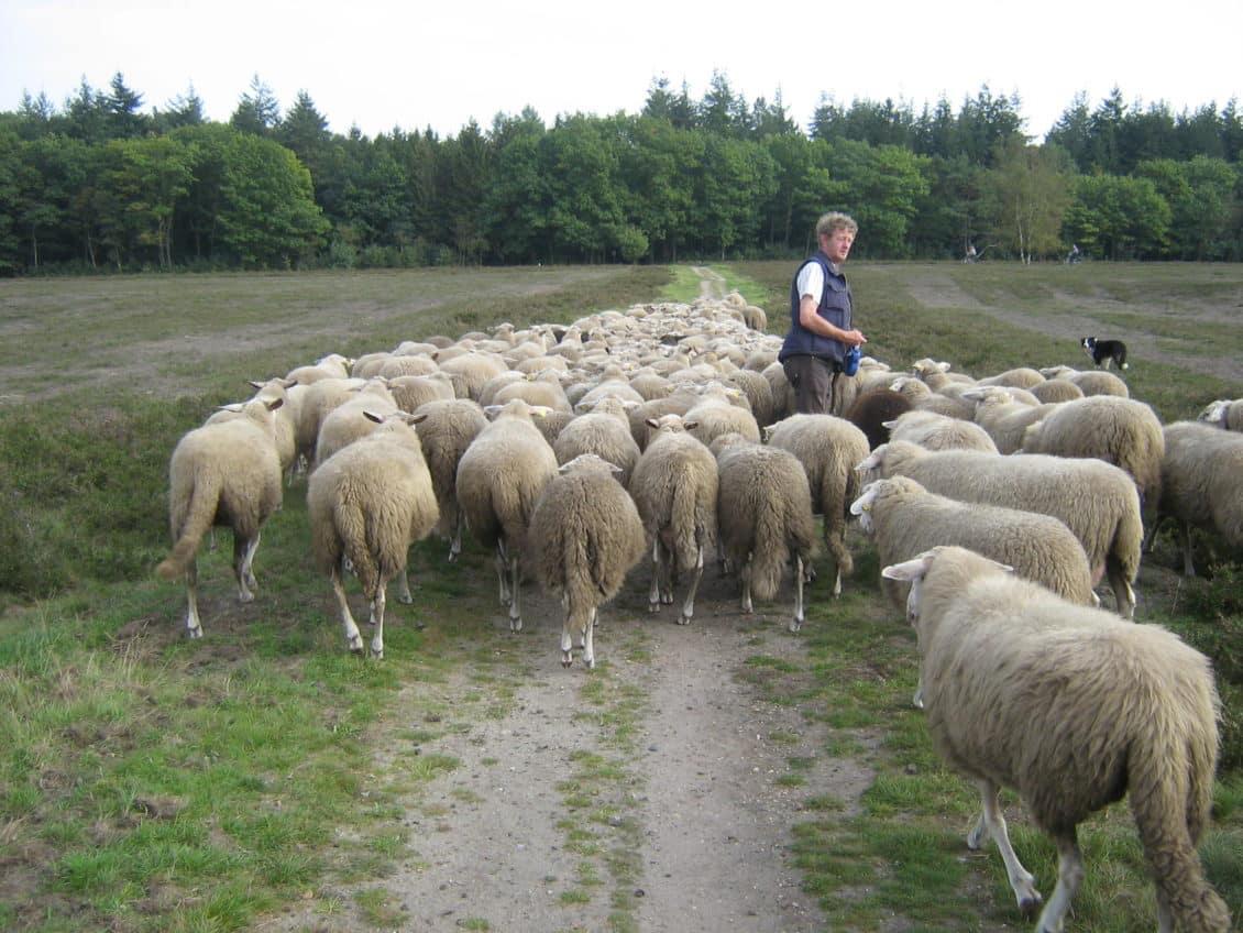 Păstorii polonezi valahi vor să transforme munții Carpați într-un brand, cu sprijinul României