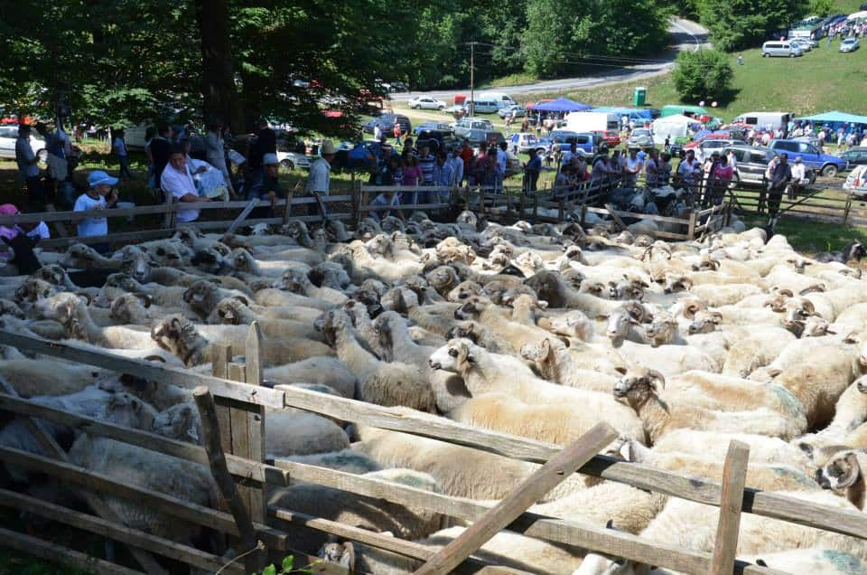 România,  al treilea crescător de ovine din UE
