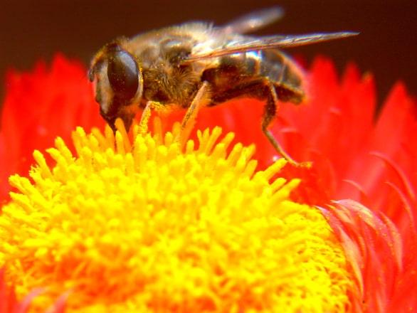 Ioan Fetea (ACA): Asociațiile din apicultură fac muncă patriotică și apoi sunt amenințate cu penalizări