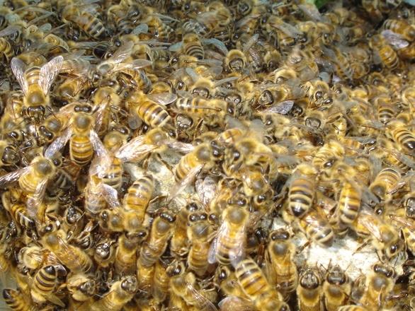 Ianuarie în apicultură. Ce trebuie să faci în prima lună a anului pentru a avea familii sănătoase de albine!