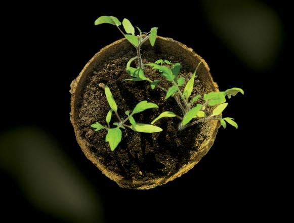Agroproiecte de succes: Ce sunt Biotehnologiile?, o nouă iniţiativă a studenţilor biotehnologi