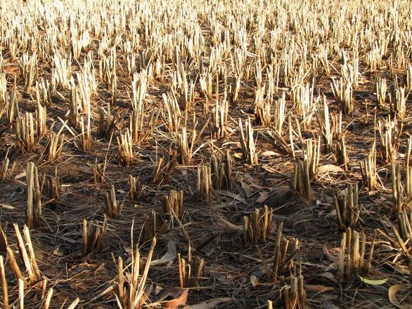 OUG pentru schema de ajutor pentru compensarea pagubelor cauzate de secetă a fost aprobată