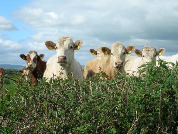 Unul dintre cei mai importanți fermieri din Cluj a decis să își vândă vacile