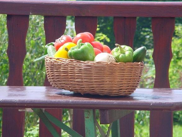 Aurel Tănase (Prodcom): Suntem dependenţi de seminţele pe care institutule de cercetare le produc