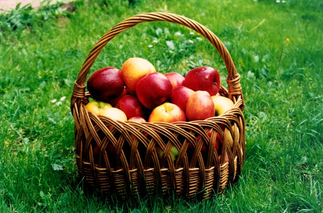 Aurel Tănase (Romconserv): Producătorii de conserve importă afine din Serbia și nu mai cumpără mere de la privați, câte ar trebui