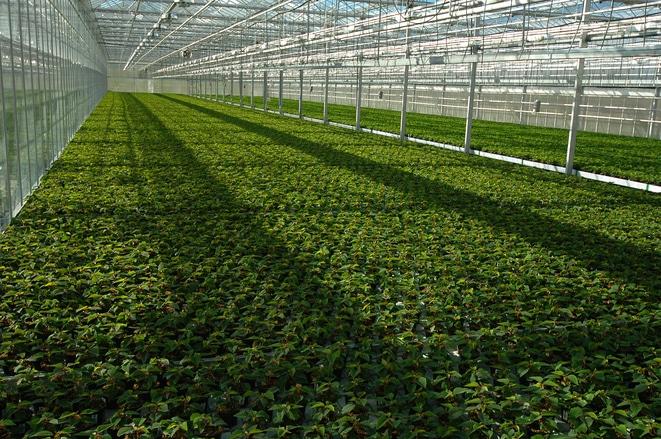 Ce tratamente fitosanitare se fac pentru plantele de seră