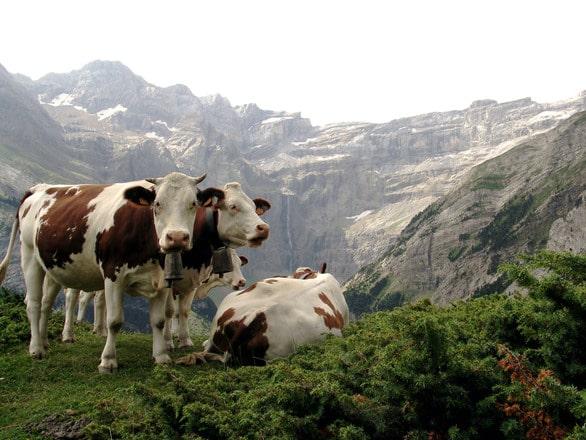 Ioan Agapi (Federaţia Agricultorilor de Munte Dorna): Vom înregistra două branduri de produse montane