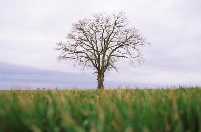 Copacii eolieni: Cât costă și câtă energie produc