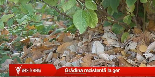 Mereu în formă: Grădina rezistentă la ger