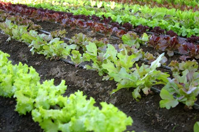 Cum să îţi organizezi grădina de legume