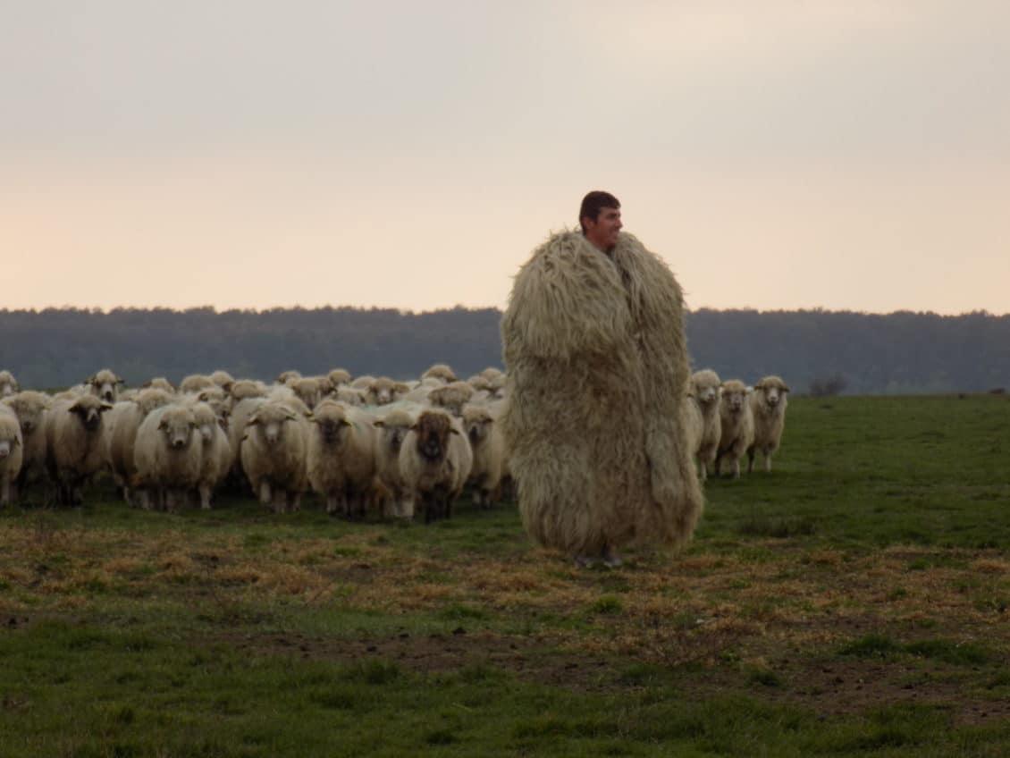 Cât de profitabilă e ciobănia în România
