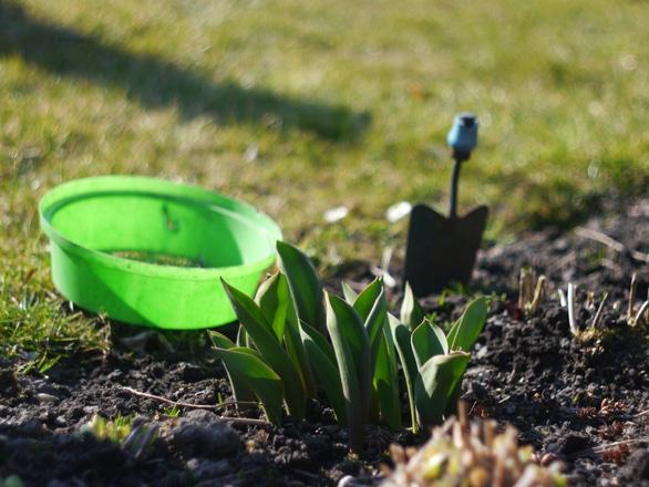 Ce legume şi zarzavaturi se plantează în această perioadă