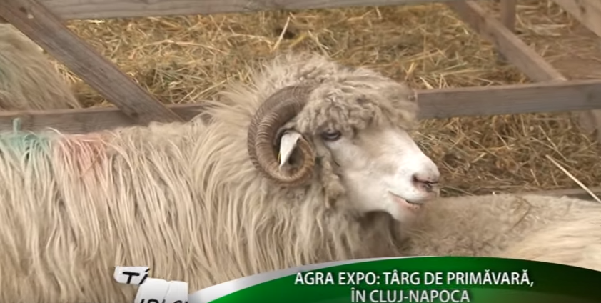 Târguri şi expoziţii: Agra Expo Transilvania, din nou, la Cluj