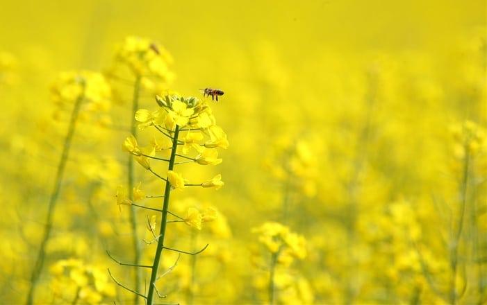 Luna Mai, în calendarul apicultorului