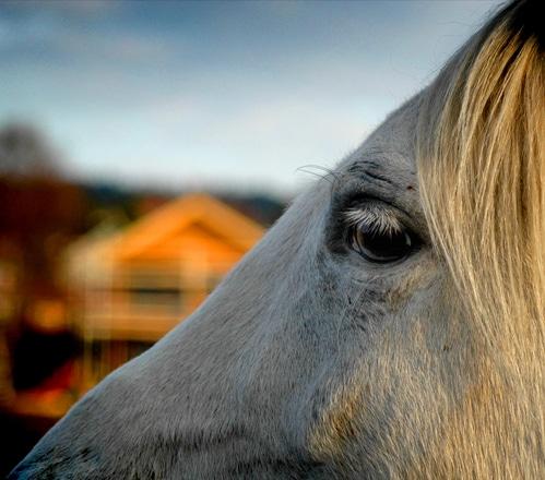 Suceava: Pomperii militari au salvat mai mulți cai din calea viiturilor
