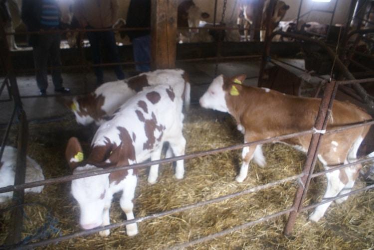 EXCLUSIV: Zoltan Haller, fermier: Mulţi crescători de bovine vor intra în greva foamei