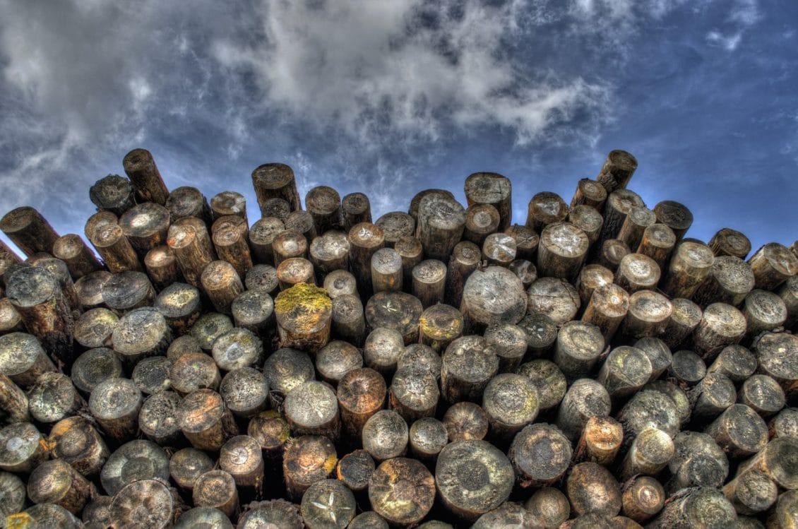 Radarul Pădurilor n-a iertat pe nimeni în 2016