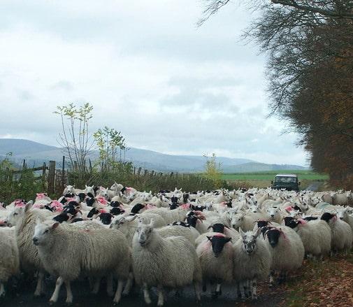 Povestea ciobanului care a strâns o avere de 25 de milioane de euro