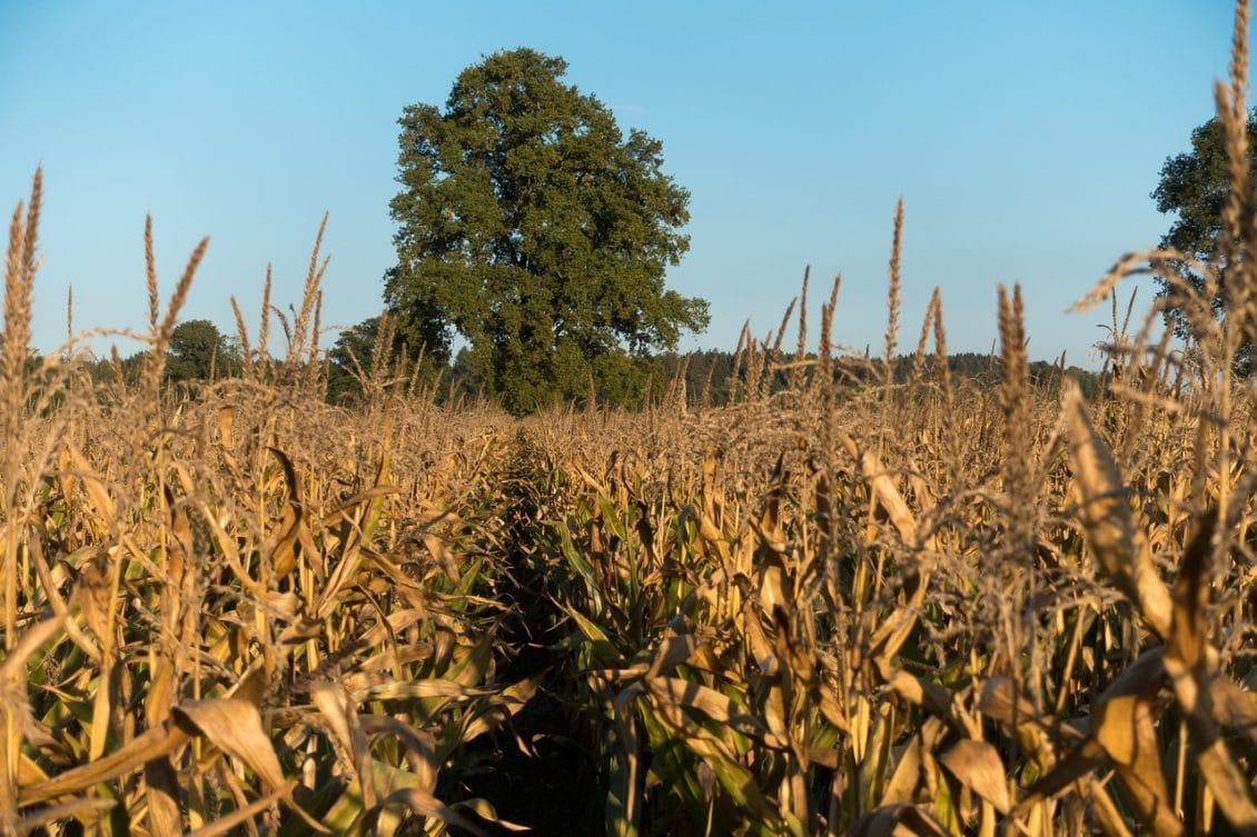 Ce îi așteaptă pe agricultori în următoarele șapte zile