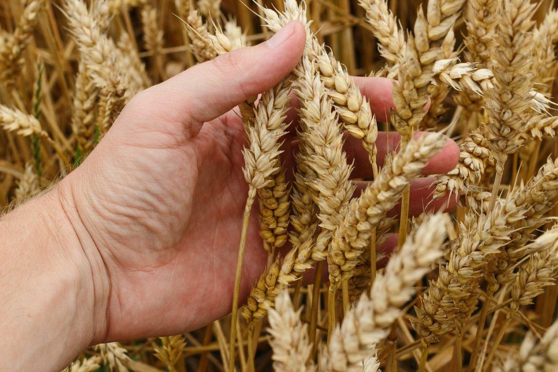Irimescu se laudă că 2016 este un an agricol bun
