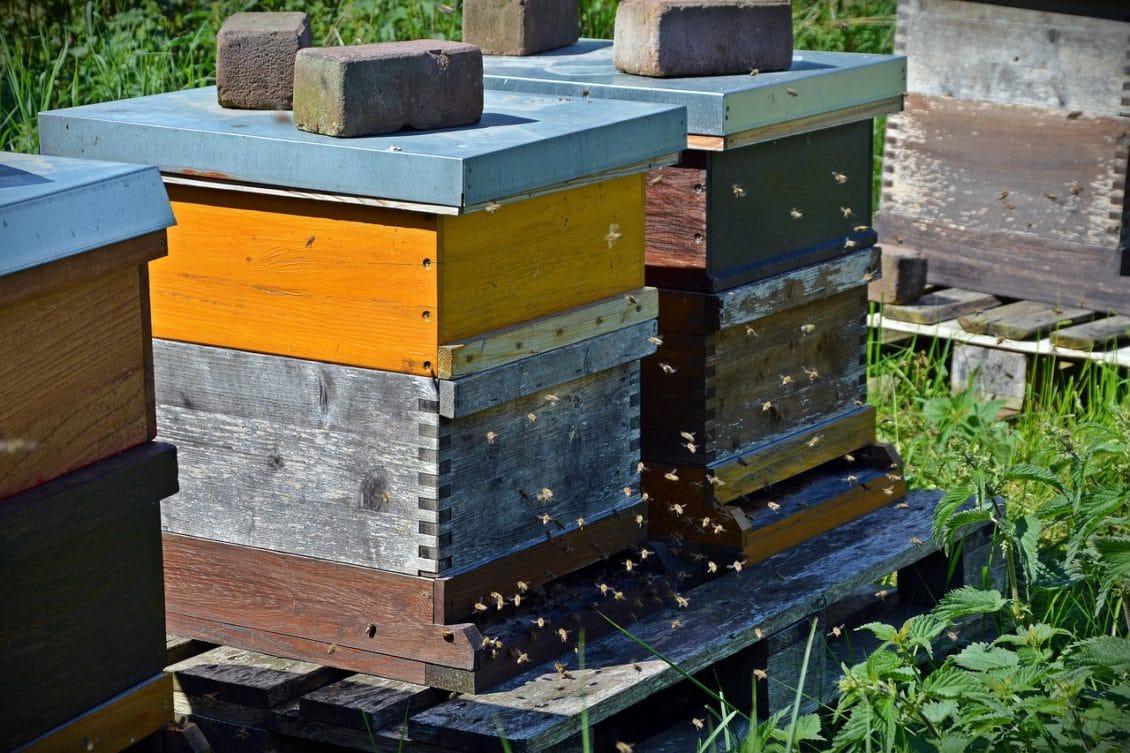 Ajutor de minimis în valoare de 15 lei pentru fiecare familie de albine