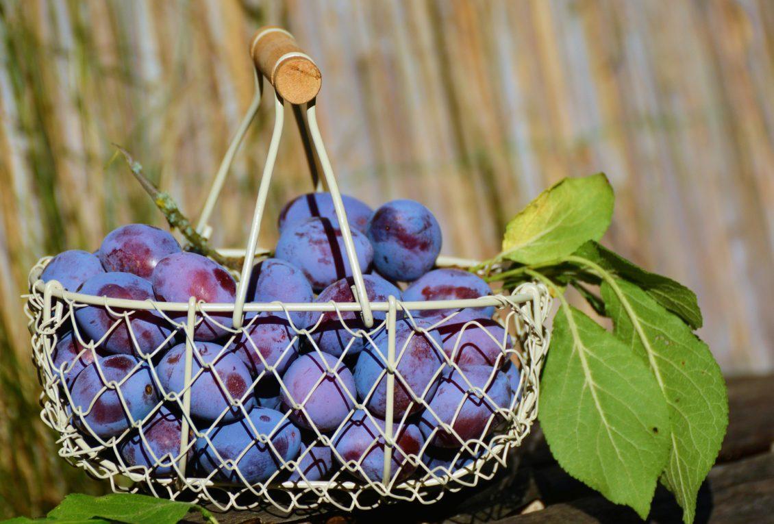Producţie record de prune