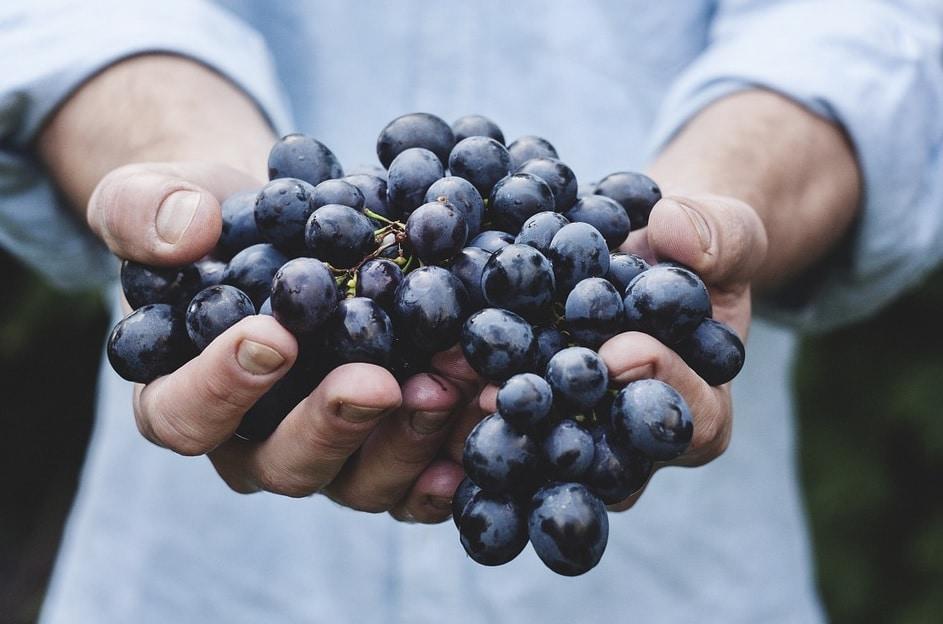 Exporturile de vin sunt in crestere