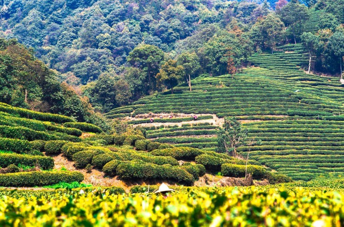 Investiție de 450 de miliarde de dolari în agricultură