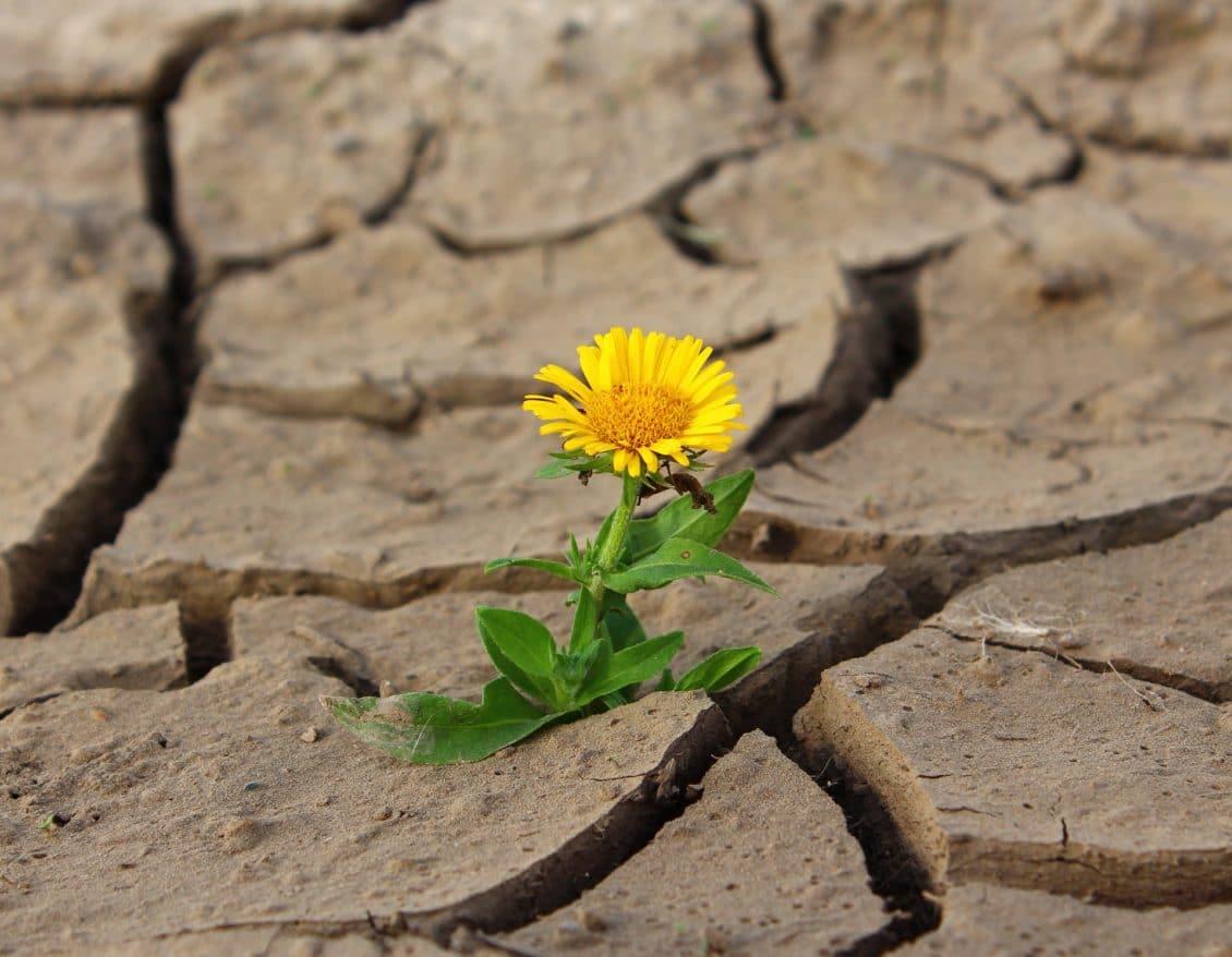 Vaslui: S-a stabilit suprafaţa afectată de seceta din această vară