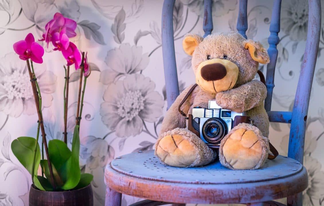 Autoritățile recunosc că s-au grăbit atunci când au omorât puiul de urs din Sibiu