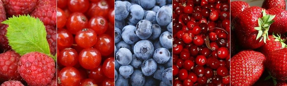 Sfaturi pentru înființarea culturilor de arbuști sau pomi fructiferi