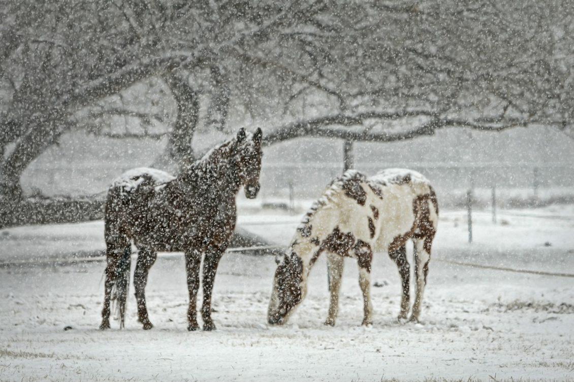 Recomandări ANSVSA pentru protejarea animalelor în perioadele cu temperaturi foarte scăzute