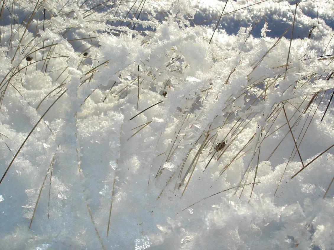 Semănăturile din Bărăgan, în pericol de îngheţ