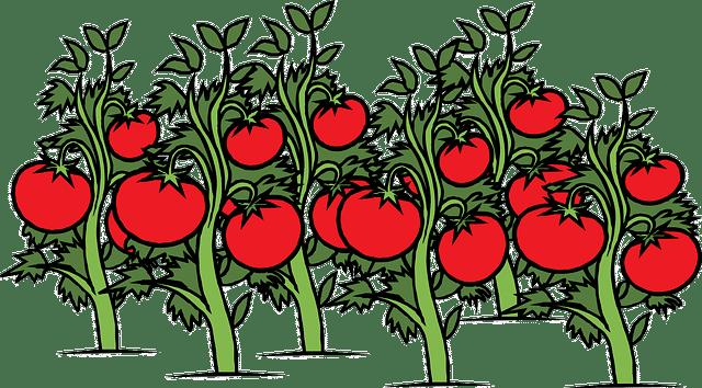 Petre Daea a confirmat ajutorul de minimis ce va fi acordat cultivatorilor de tomate